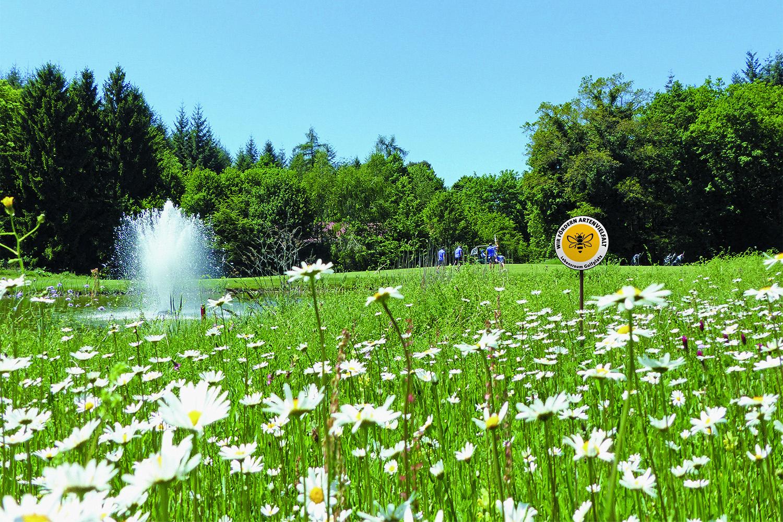 Lebensraum Golfplatz - Wir fördern Artenvielfalt. So lautet das Bekenntnis vieler Golfanlagen. (Foto DGV/Kirmaier)