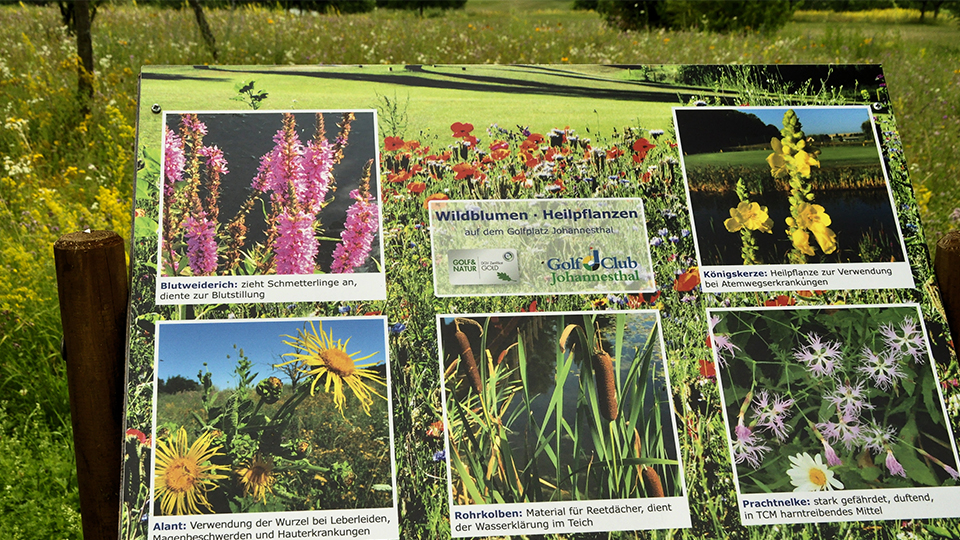 Früher waren die 65 Hektar des Golfclubs Johannesthal Ackerland, heute ist die Spielfläche wertvoller Lebensraum für Tiere und Pflanzen (Bild: GC Johannesthal)