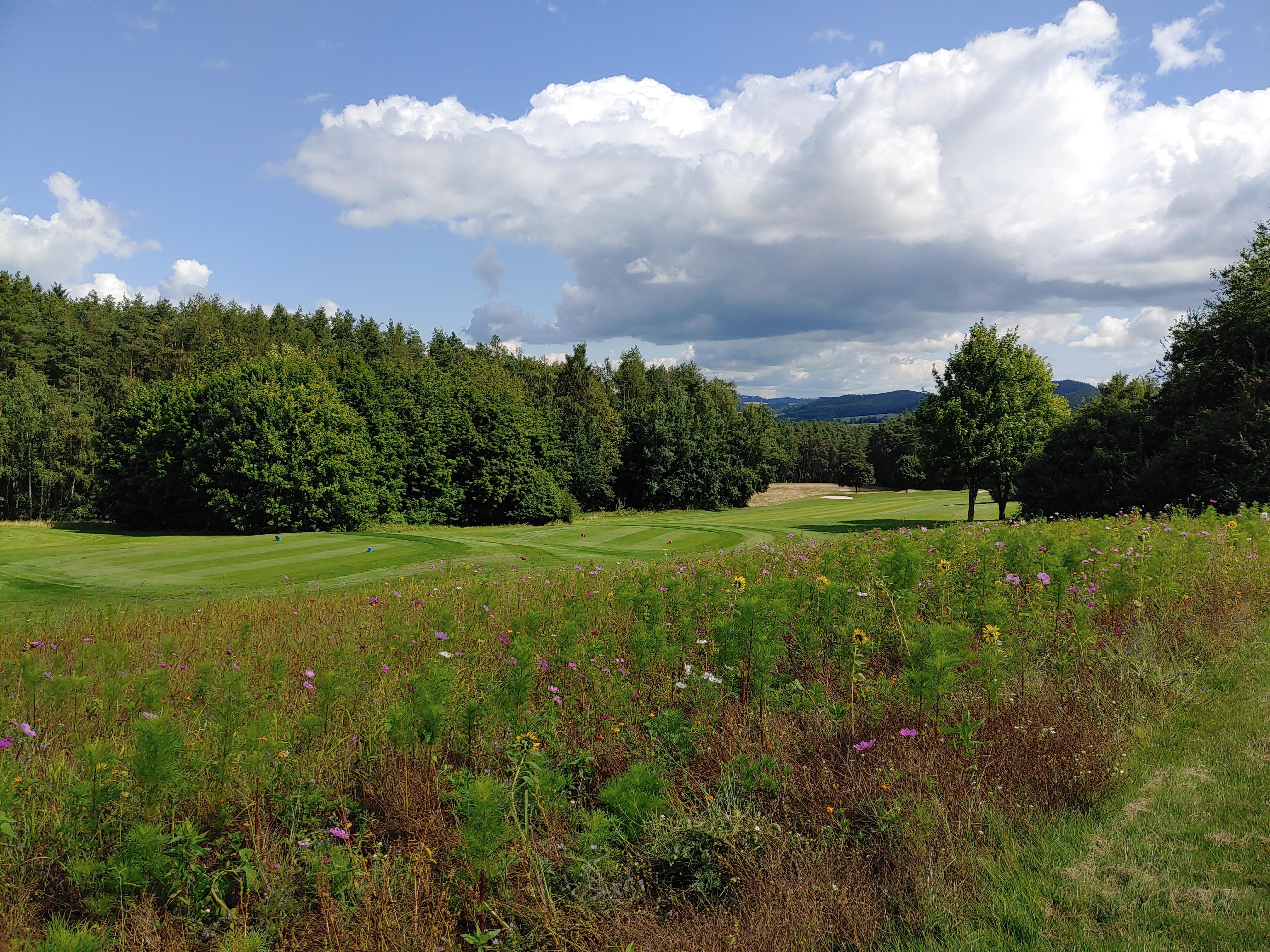 Die Blühflächen auf dem Golfplatz wurden ausgeweitet