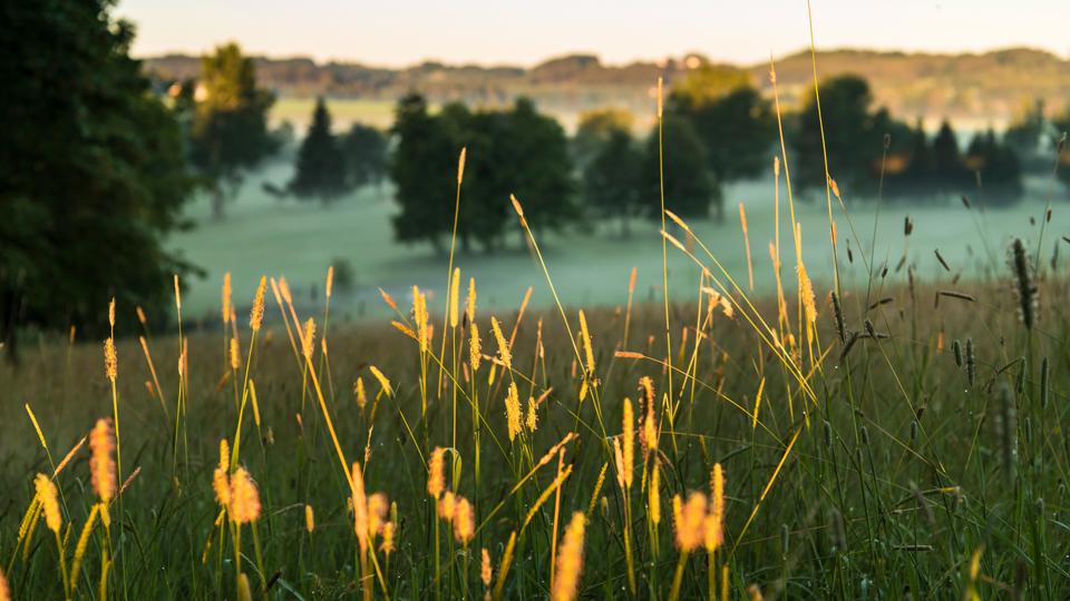 Gold für viel Grün (Bild: Stephan Schöttl)