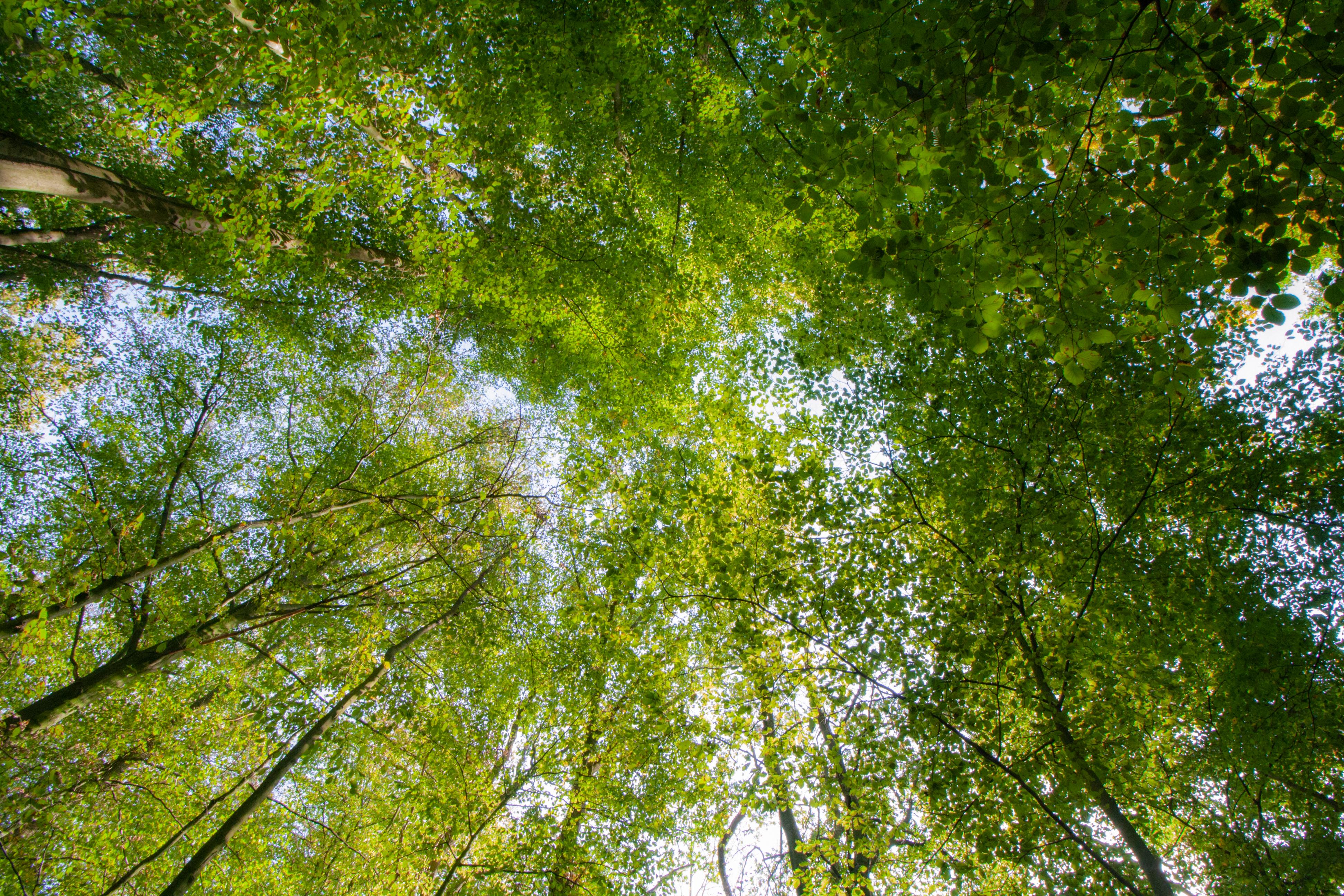 Fördermittel für Klimaschutz (Bildquelle: iStock.com/Stephan Walochnik)