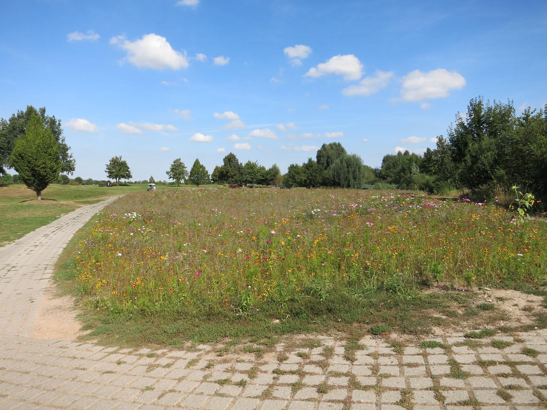 Eine neu angelegte Blumenwiese - hier im GC St. Leon-Rot (Foto: DGV/Biber)