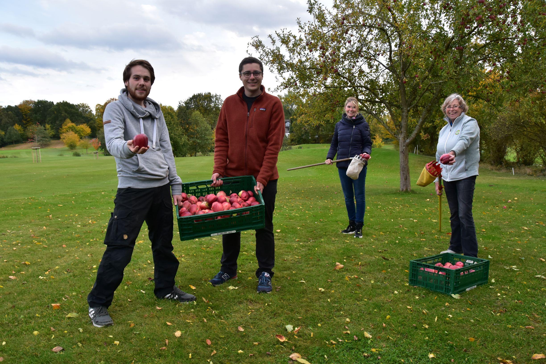 Apfelernte im Golf-Club Kitzeberg