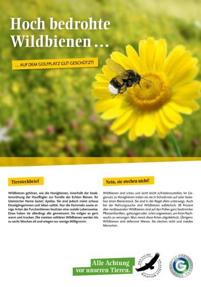 Wildbienen - Hoch bedroht