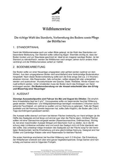 Anleitung Aussaat und Pflege einer Wildblumenwiese